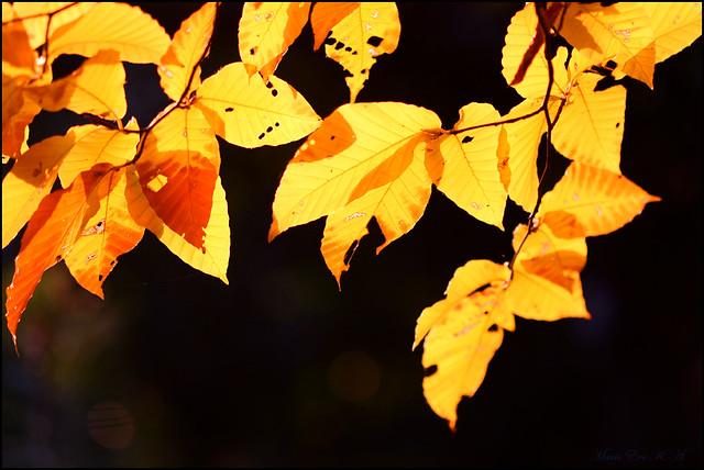 Golden leaves said
