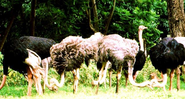 Arusha - Die erste Lodge beherbergt Gehege für verwaiste Tiere