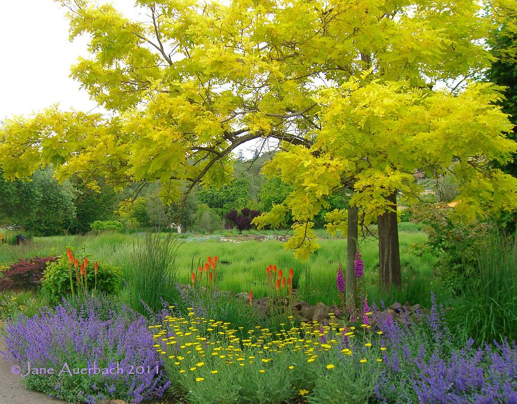 Wine Country Garden Matanzas Creek Winery S Lavender Field Flickr