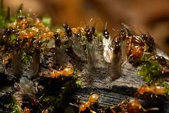 ants | by myriorama