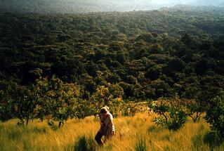 Helen, Kakamega rainforest
