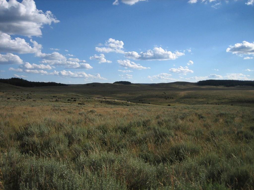 yellowstone plains