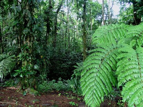 Verde da Costa Rica