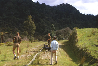 Mustering on the Herbert's farm, Tangarakau, Taranaki, New Zealand, 1968