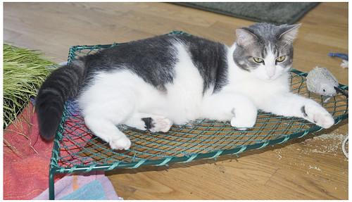 Tampopo in her hammock