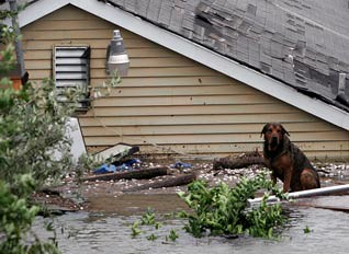 The animals are hurting with Katrina too. | by Dave Mathews