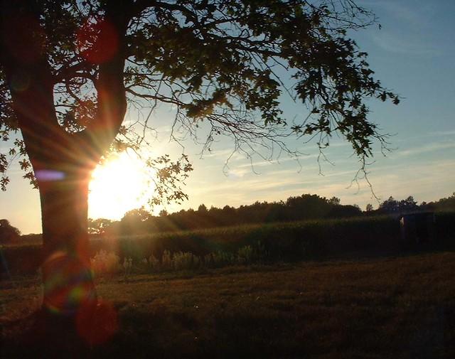 Coucher de soleil dans les Landes