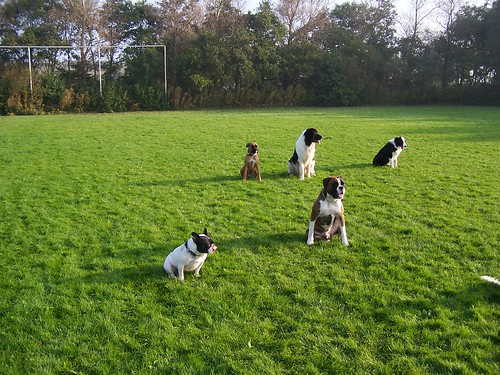 Hondenschool / Training the dogs