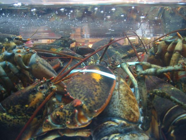 lobster orgy