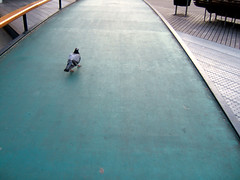 pigeon on schouwburgplein