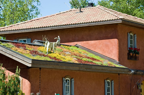 Live Roof (REAL) with Goat (NOT REAL) | by desertdutchman