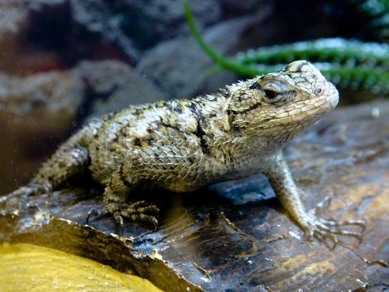 Reptile VI