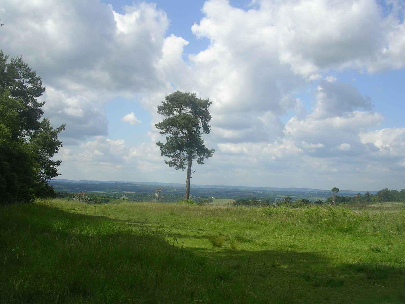 Ashdown Forest view Ashurst to Hartfield