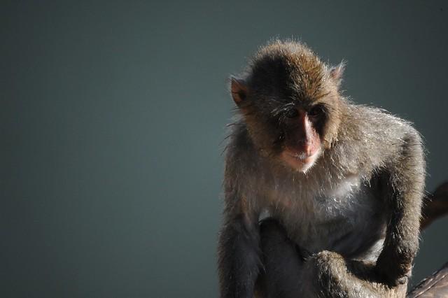 Una scimmietta al Bioparco