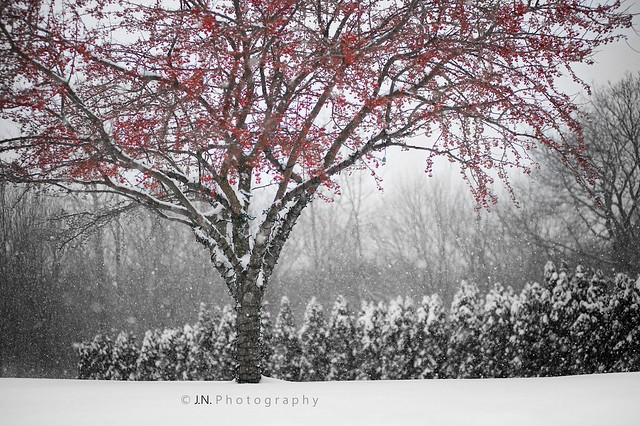 Glory of Winter
