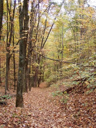 park autumn hiking trail steelecreekpark bristoltn