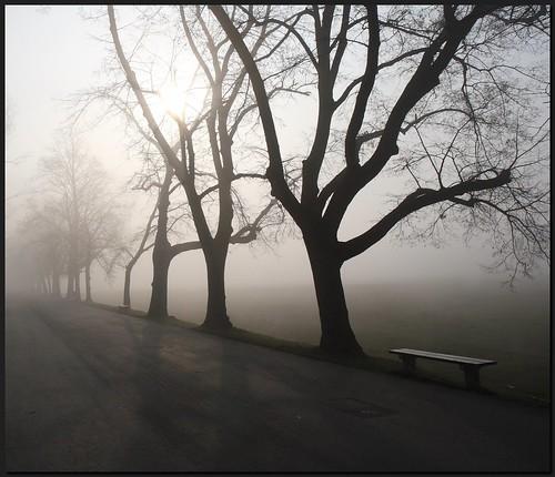 morning trees misty bench geotagged sunday błonia platinumphoto dzwjedziak geo:lat=50060996 geo:lon=19912237