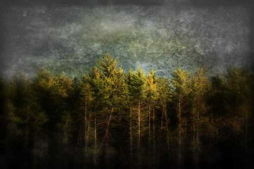 trees light sunlight storm art texture forest photoshop canon painting landscape woods computerart dreamcatcher westtownsend townsendma thechallengefactory