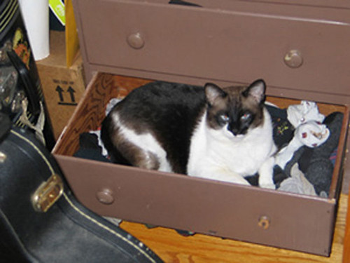 Kitty in a drawer! | by S_Crews