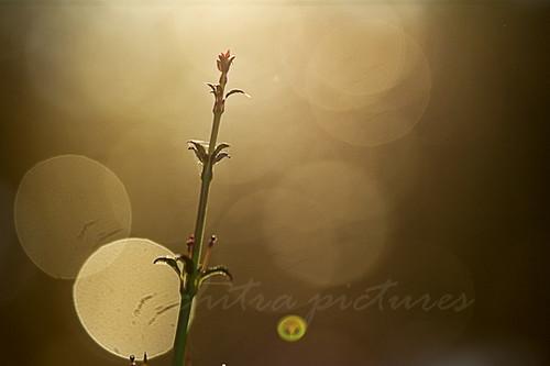 Unfaltering Aim | Do Enjoy It On Black | Chitra Aiyer | Flickr