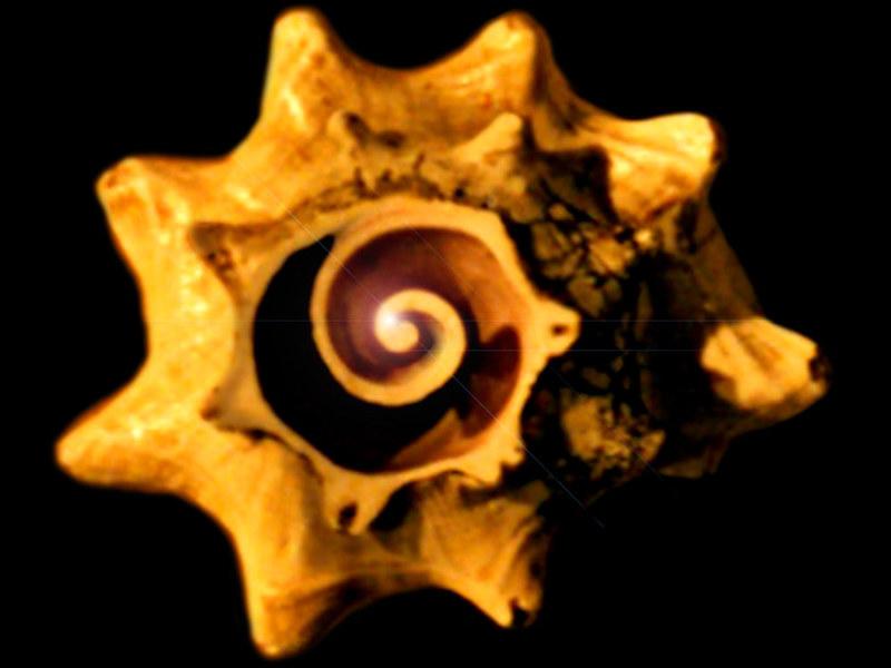 Espirales premexicas 33