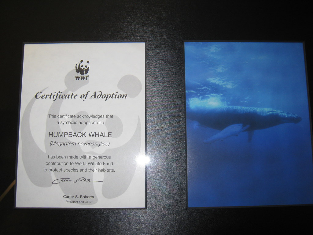 Humpback Whale Certificate Of Adoption Quibids Worked Wit