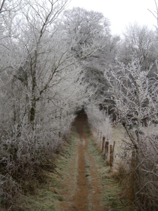 Frosty path Wanborough to Godalming