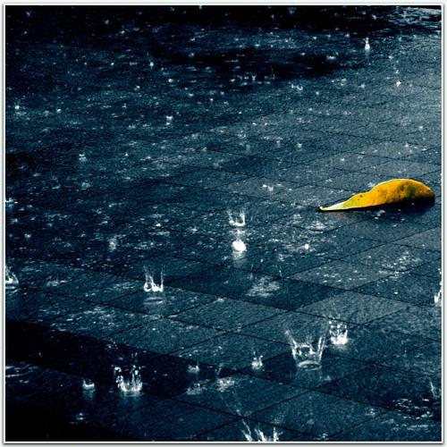 hard rain | by Dyrk.Wyst