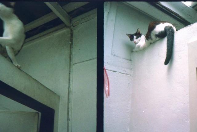 CCTV on toilet wall