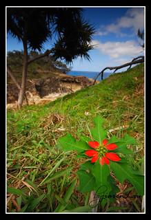 North Gorge Walk, Point Lookout - North Stradbroke Island | by Jiaren Lau