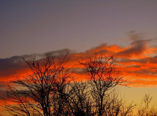 blue trees sunset orange amor explore struckbyrainbow