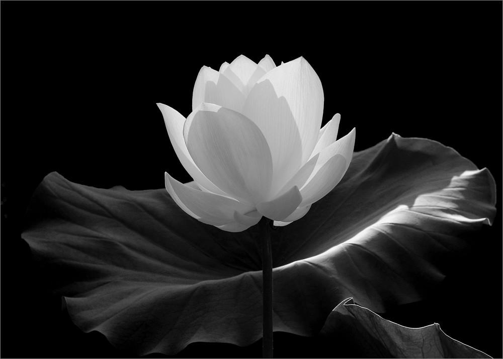 Flower by Bahman Farzad