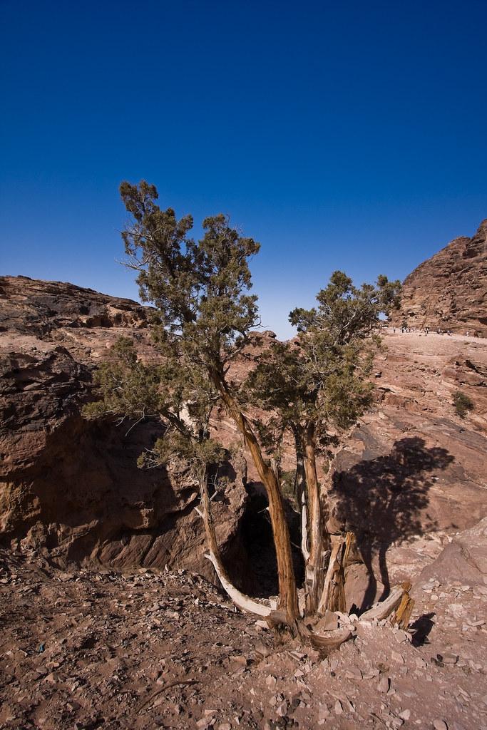 tree of Petra II by mouzhik