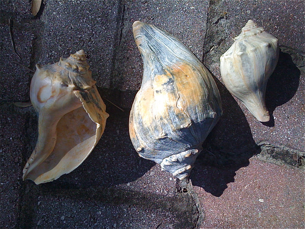 The Three Shell Day