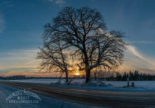 ridgefield washington unitedstates us 2017 snow tree silhouette sunset landscape street slush ice