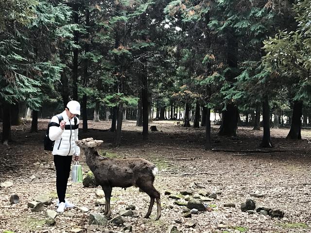 At Nara Deer Park
