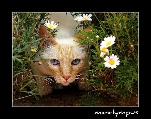 Net in the flowers