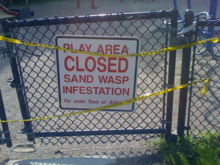 """What is a """"sand wasp""""?"""