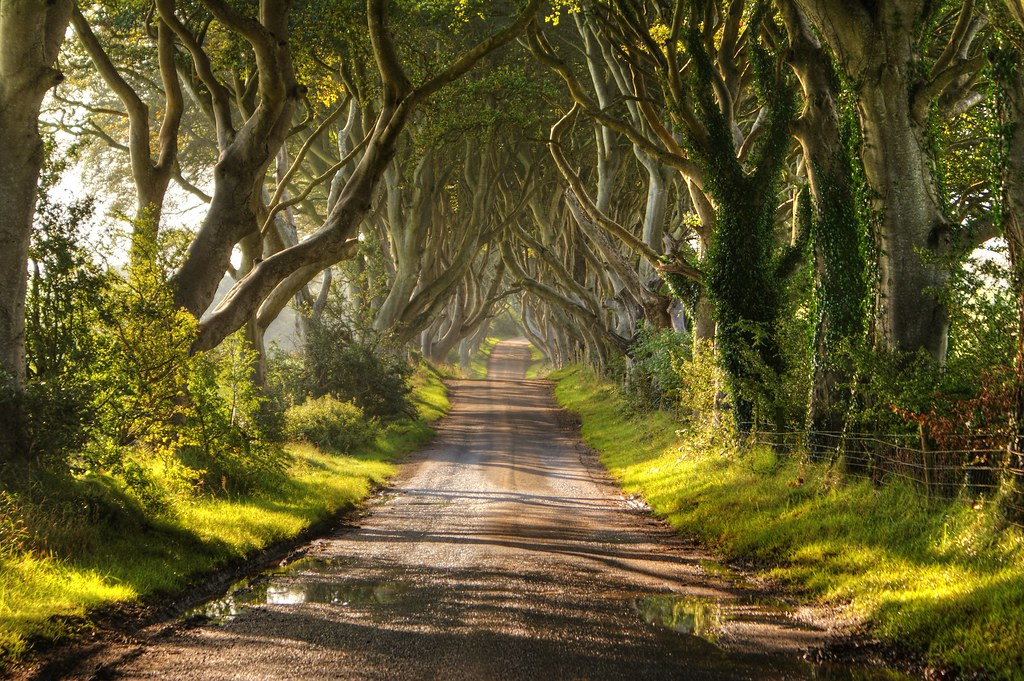 The Dark Hedges Northern Ireland by Chris Tait