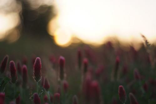 old red flower 50mm nikon texas fuji east april salem f18 clover 2008 s5