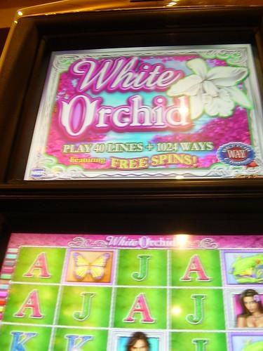Wild Orchid Slot Machine
