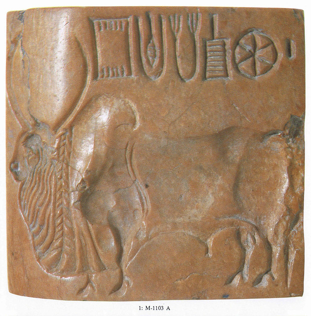 Zebu or humped bull with 2 horns (head in profile)