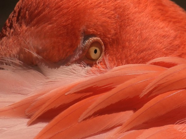 Flamingo #2 On the Watch