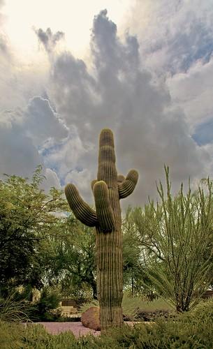 arizona cactus sky cloud sun clouds cacti landscape desert cloudy scenic naturallight bluesky valley vista dramaticsky beautifulclouds peoria beautifulview desertview afternoonlight cumulous scenicview maricopacounty cumulouscloud nikond200 peoriaarizona peoriaaz dearflickrfriend jimhankey