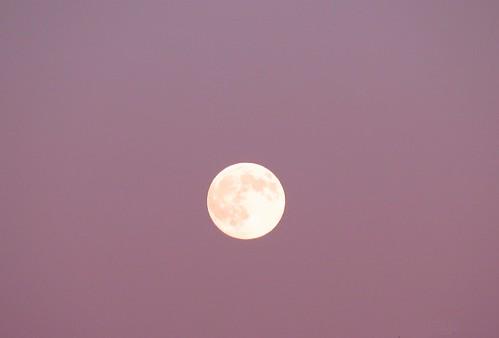 full moon pink sky | by Water Droplet Designs