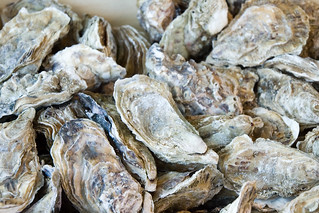 oysters   by Paul and Jill