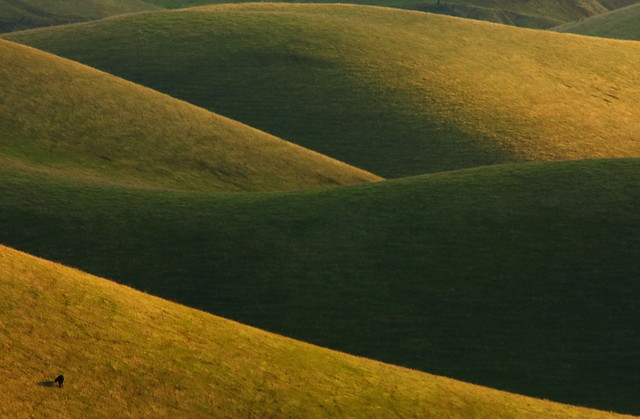 Four Curves,Two Hundred Trillion Blades of Grass,and a Cow-a natural abstract