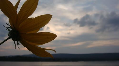 sunset mountain flower macro river