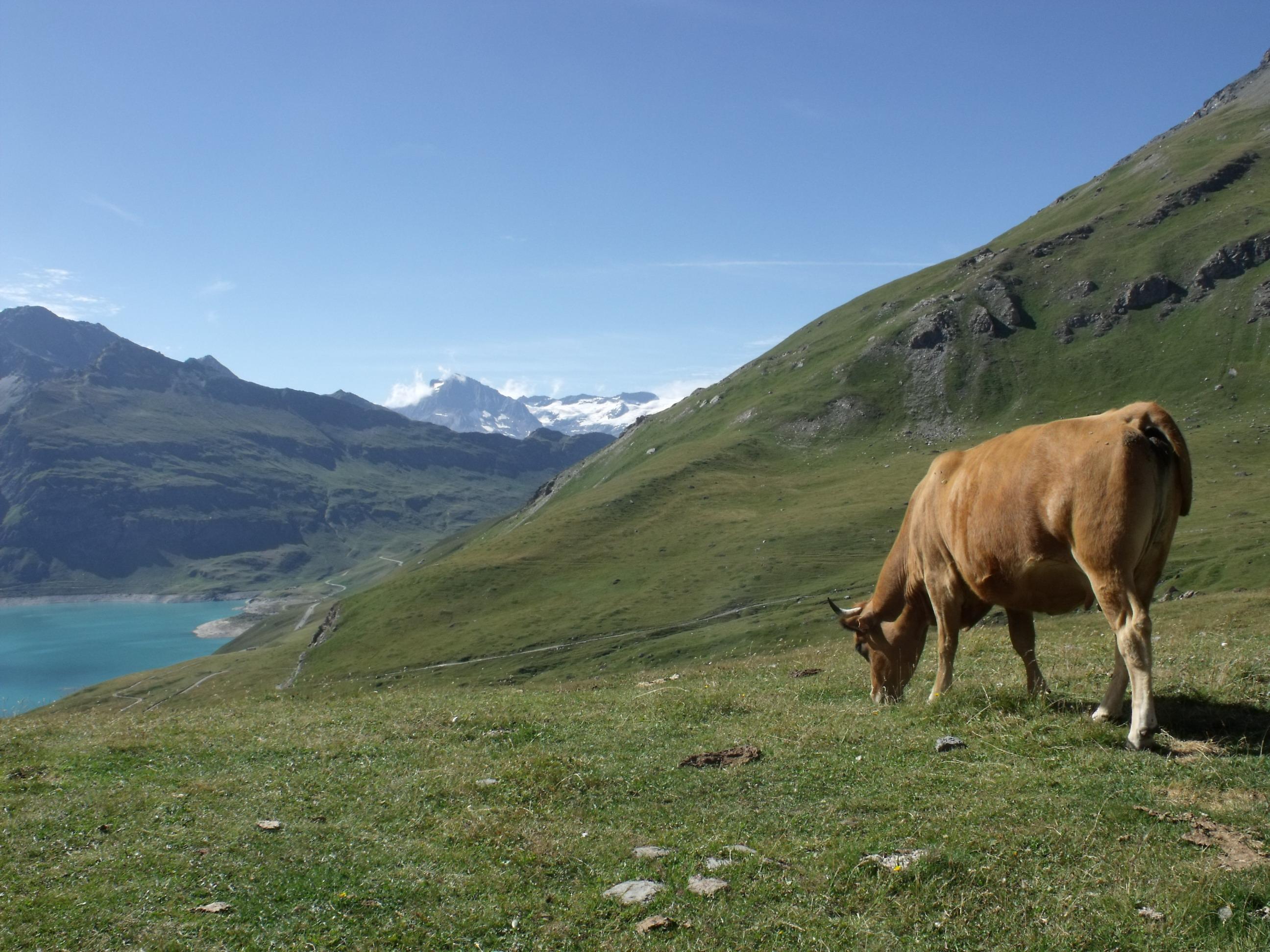 Mont Cenis © D.Dereani, Fondation Facim