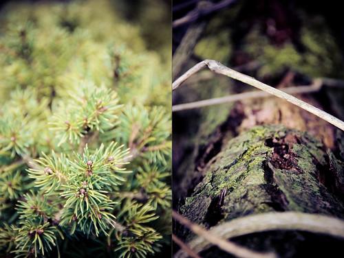 wood green forest deutschland diptych grün wald brandenburg myfave eberswalde diptychon 4x3 spechthausen